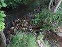 Soutok Tiché Orlice a bezejmenného pravostranného potoka v Hnátnici u golfového hřiště.