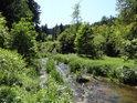 Tichá Orlice v lesním úseku mezi Lichkovem a Mladkovem.