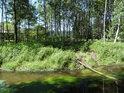 Tichá Orlice je při vstupu do Lichkova bohatá na sytě zelené vodní rostlinstvo.