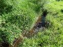 Prosluněný úsek Tiché Orlice v horním toku.
