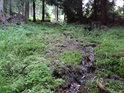 Horní úsek Tiché Orlice je bažinatý.