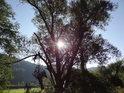 Slunce za pravobřežní vrbou u Tiché Orlice v místě zvaném Luh.