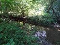 Dolenský potok těsně nad vyústěním do Tiché Orlice v Brandýse nad Orlicí.