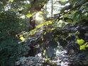 Slunce v lužním prostředí se dostává svými paprsky přes listy olší.